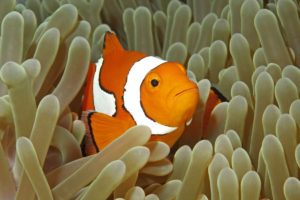 Clownfish in the ocean - comparing Nemo to SEO - will they find you - 1200 x 800